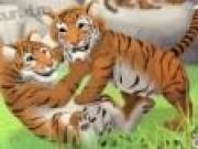 Jocuri cu Tigri la Zoo