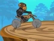motorcross cu maimute soferi